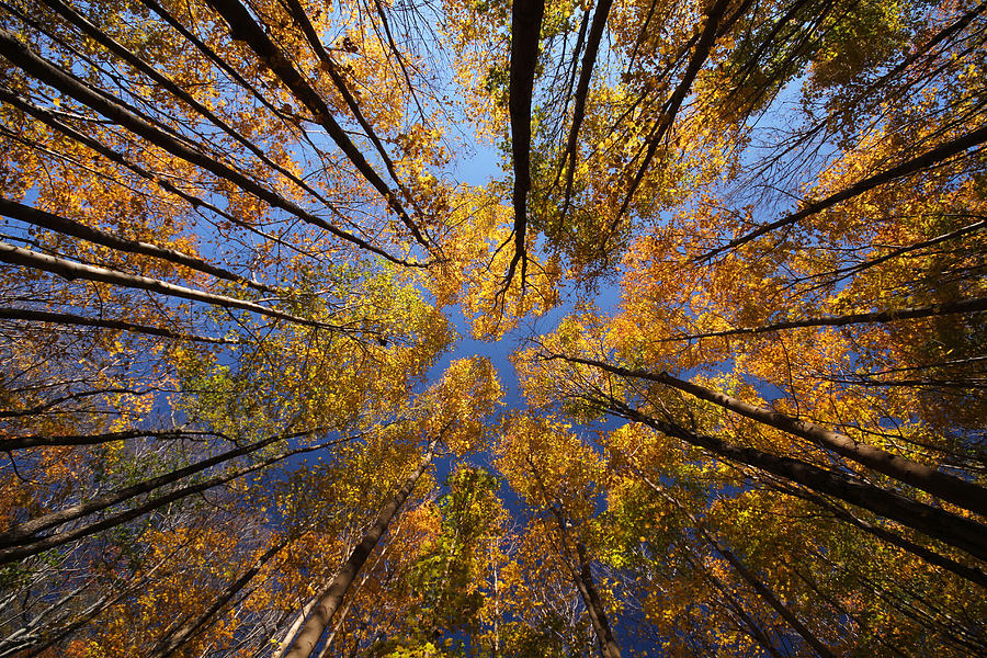 Autumn Photograph - Autumn Sky by Mircea Costina Photography