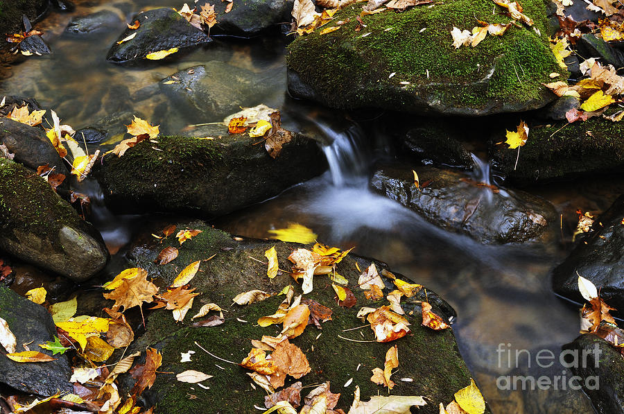 Autumn Stream Monongahela National Forest Photograph