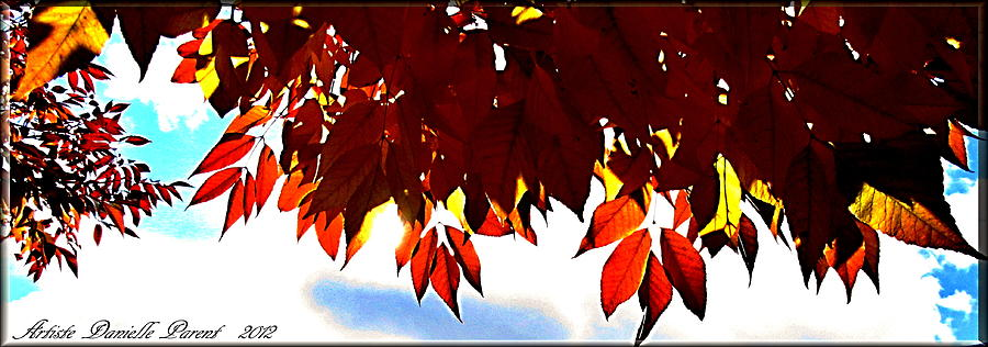 Pattern Photograph - Autumn Sun Glory by Danielle  Parent