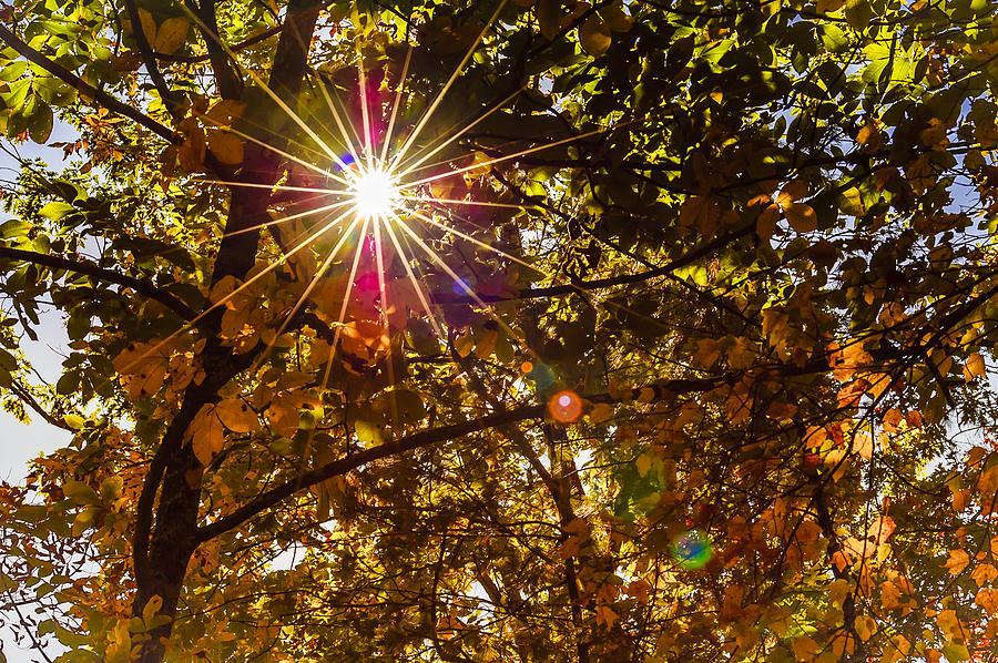 Cades Cove Photograph - Autumn Sunburst by Carolyn Marshall