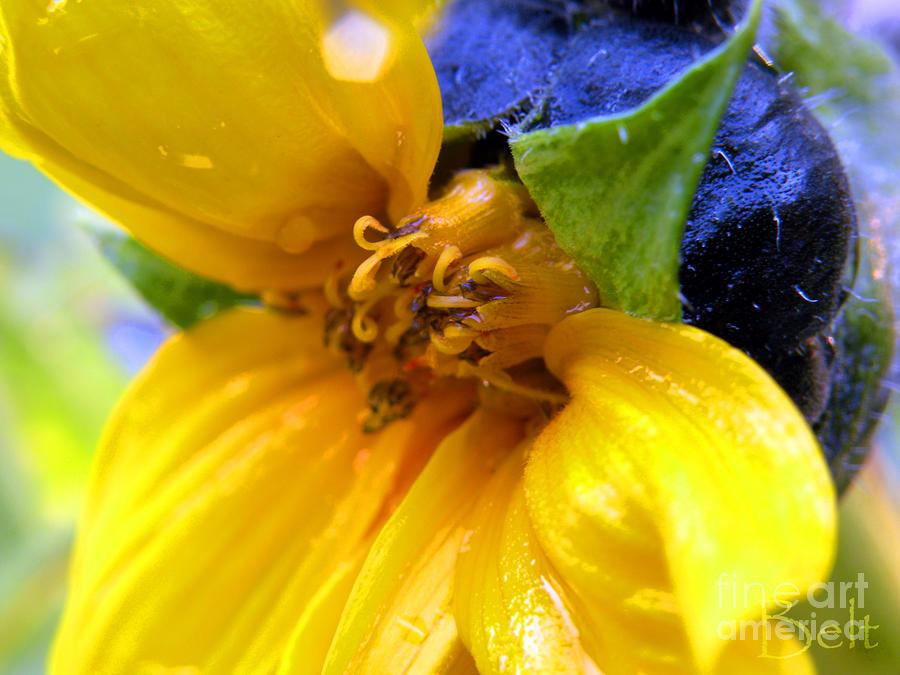 Autumn Sunflower No.1 Photograph