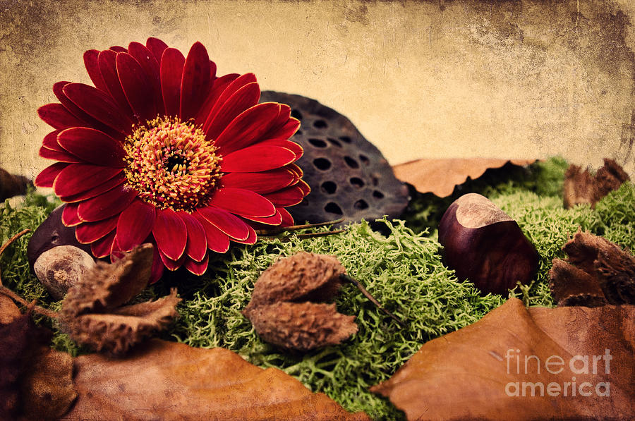 Autumn Time Photograph  - Autumn Time Fine Art Print