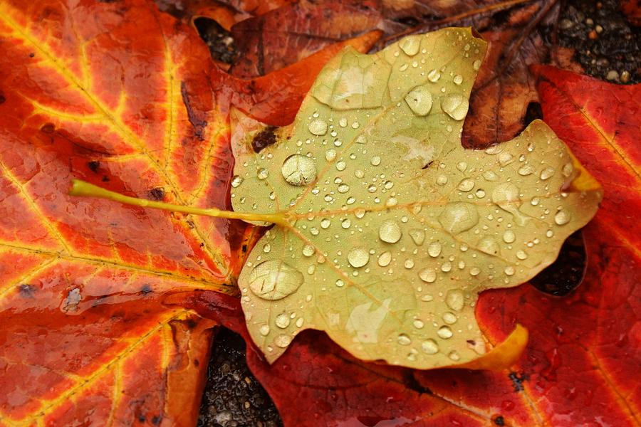Leaves Photograph - Autumn Treasures by Matthew Green
