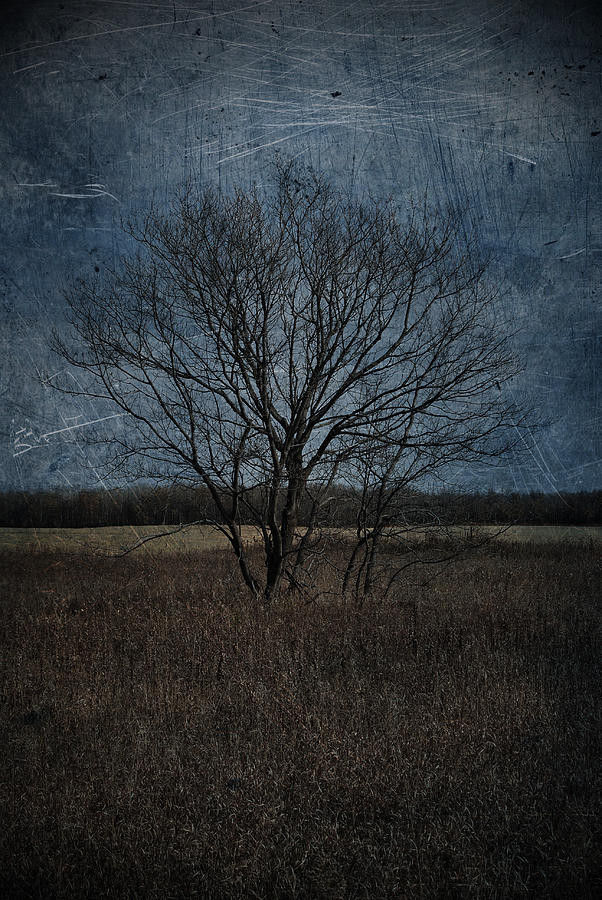 Autumn Tree Photograph  - Autumn Tree Fine Art Print