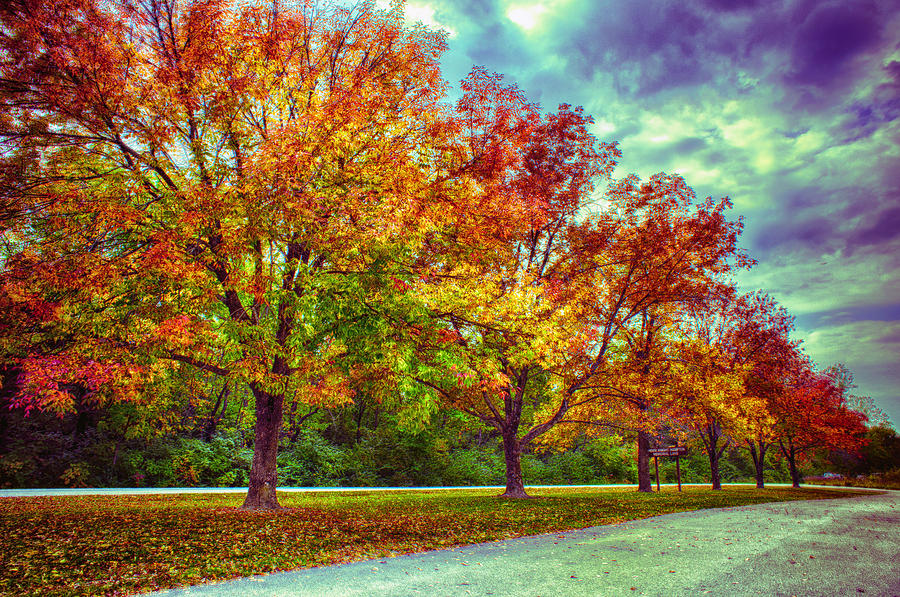 Autumn Tree Line At Busch Photograph  - Autumn Tree Line At Busch Fine Art Print