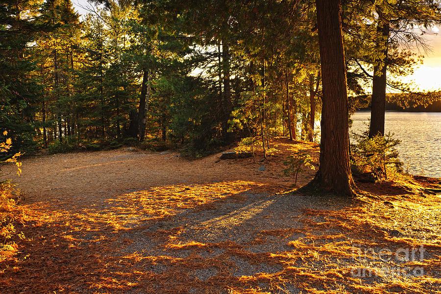 Autumn Trees Near Lake Photograph