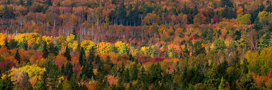 Autumn Trees Panorama Photograph  - Autumn Trees Panorama Fine Art Print
