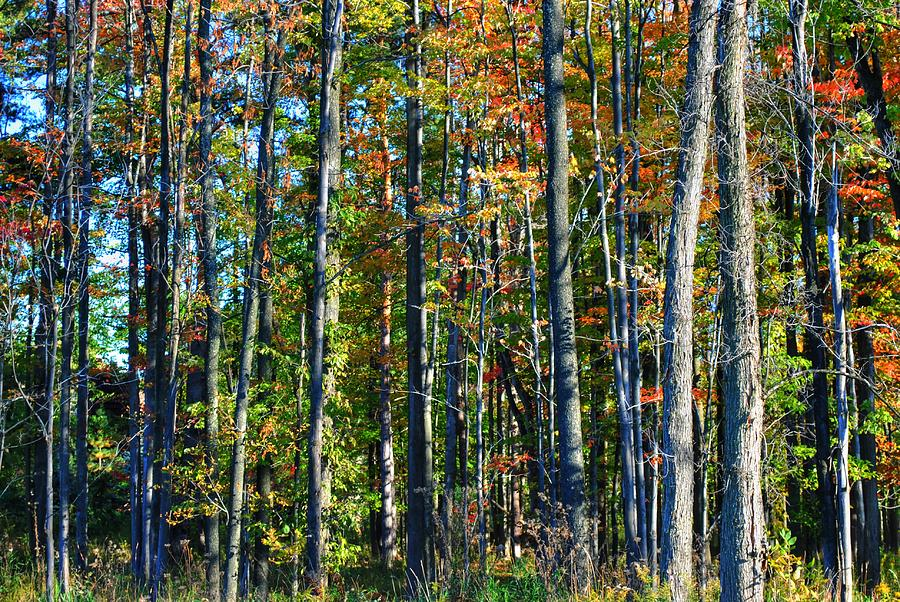 Autumn Tress is a photograph by Michael Frank Jr which was uploaded on ...