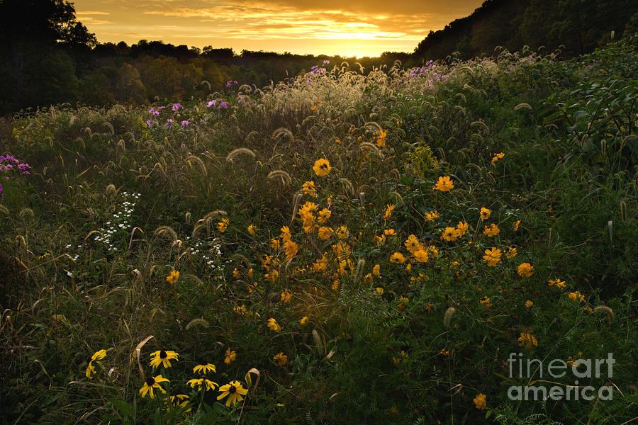 Sun Photograph - Autumn Wildflower Sunset - D007757 by Daniel Dempster