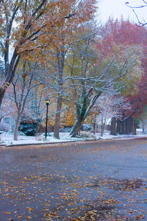 Autumn Winter Street Light Color Photograph  - Autumn Winter Street Light Color Fine Art Print