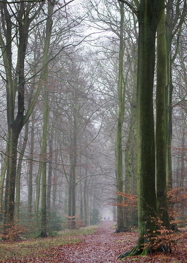 Autumn Woodland Avenue Photograph