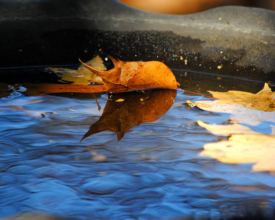 Autumns Reflection Photograph
