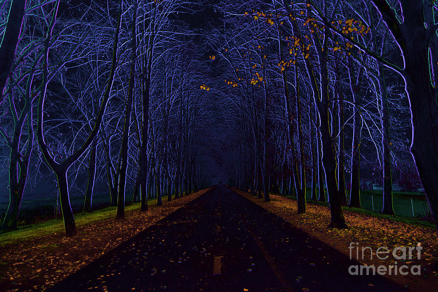 Avenue Of Trees Digital Art  - Avenue Of Trees Fine Art Print