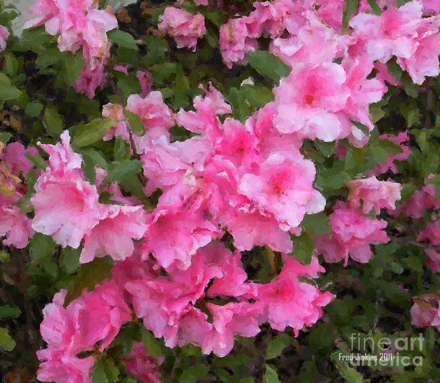 Azalea Watercolor  Photograph  - Azalea Watercolor  Fine Art Print