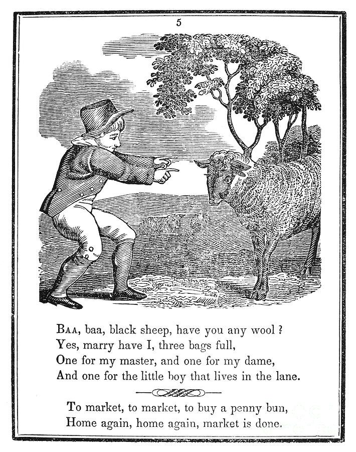 Baa, Baa, Black Sheep, 1833 Photograph  - Baa, Baa, Black Sheep, 1833 Fine Art Print