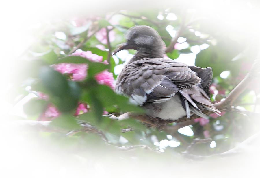 Baby Bird In Crape Myrtle Tree Photograph