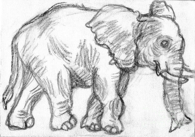 Baby Elephant DrawingPencil Drawings Of Baby Elephants
