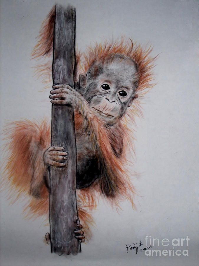 Baby Orangutan  Drawing