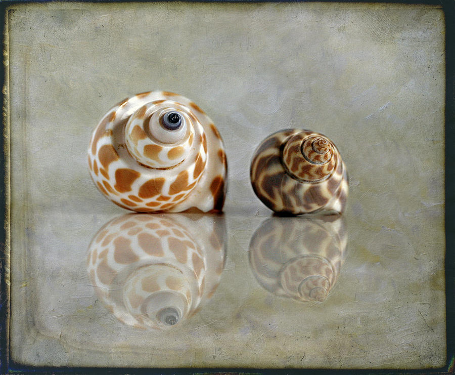 Babylon Shells Photograph