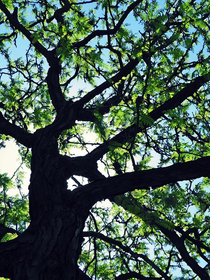 Backlit Tree Photograph  - Backlit Tree Fine Art Print