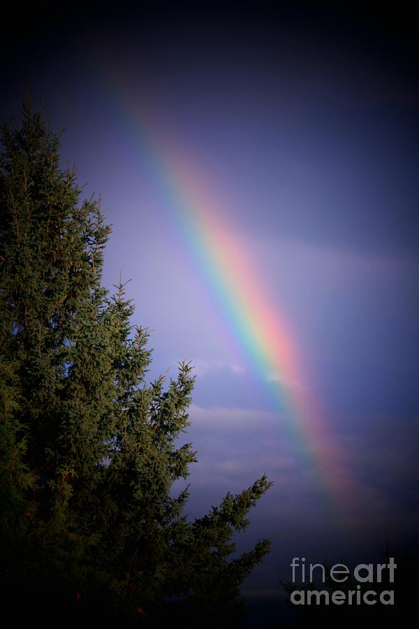 Backyard Rainbow Photograph