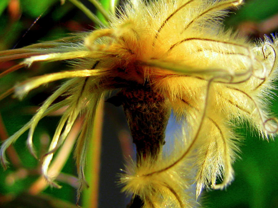Bad Hair Day Photograph  - Bad Hair Day Fine Art Print