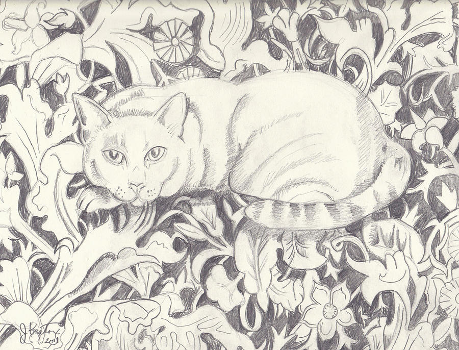 Bailey The Cat Drawing  - Bailey The Cat Fine Art Print