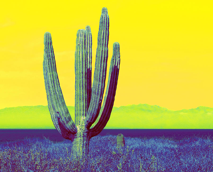 Baja Photograph  - Baja Fine Art Print