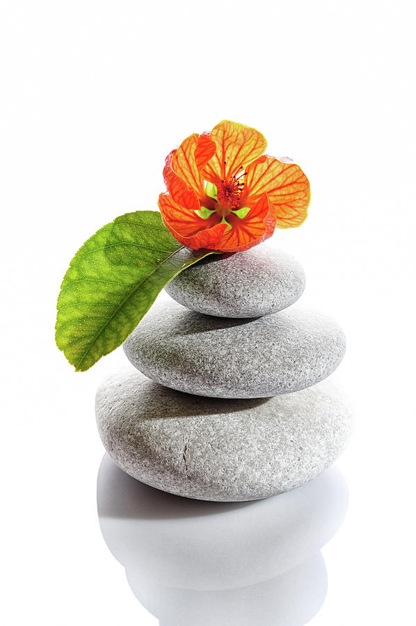 Balanced Stones And Red Flower Photograph