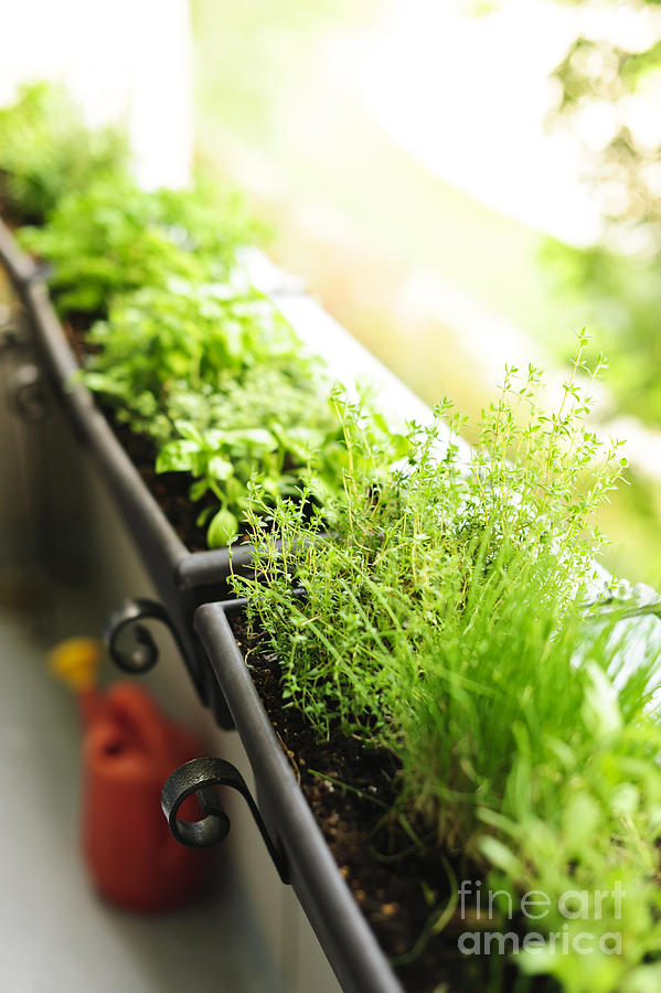 Balcony Herb Garden Photograph