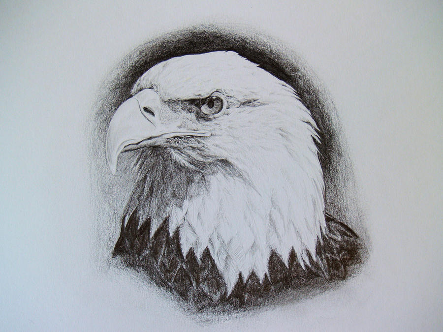 Bald Eagle Pencil Drawings  Eagle Head Pencil Drawing Easy
