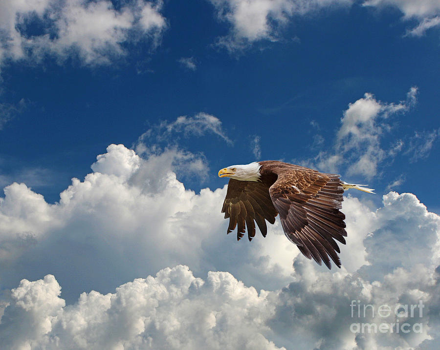 Bald Eagle In The Clouds Photograph  - Bald Eagle In The Clouds Fine Art Print