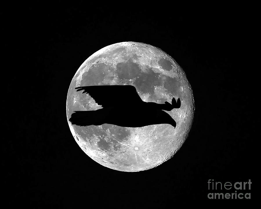 Bald Eagle Moon Photograph  - Bald Eagle Moon Fine Art Print