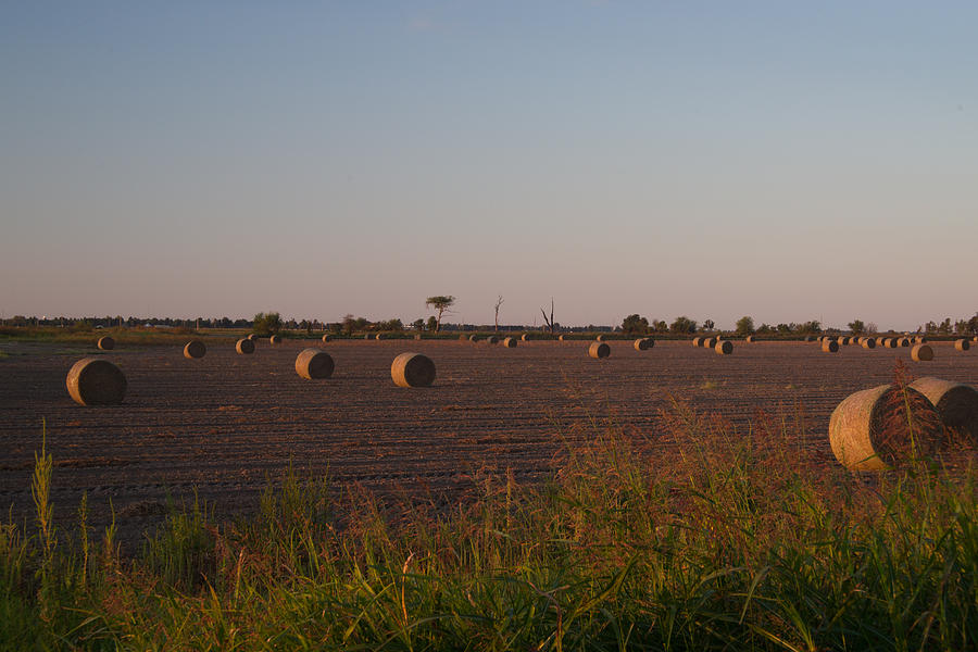 Bales In Peanut Field 1 Photograph
