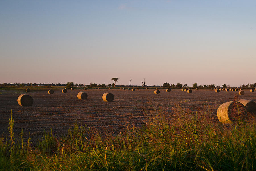Bales In Peanut Field 10 Photograph