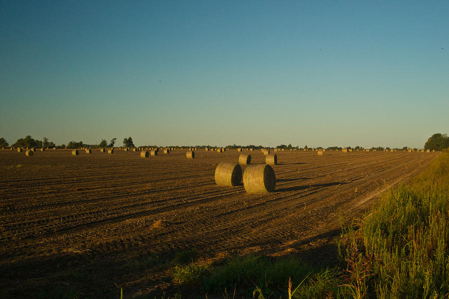 Bales In Peanut Field 13 Photograph