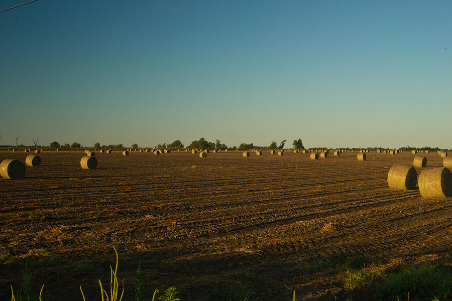 Bales In Peanut Field 9 Photograph