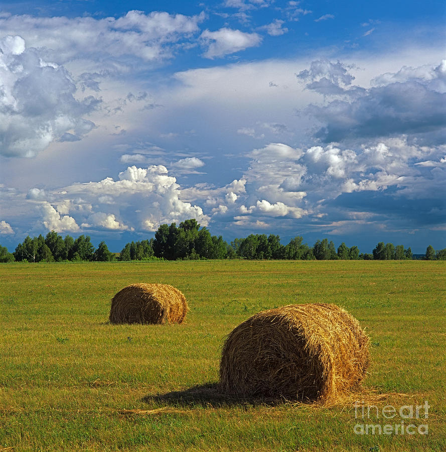 Bales Of Hay Photograph  - Bales Of Hay Fine Art Print