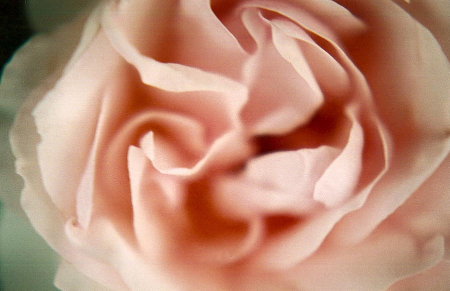 Soft Rose Photograph - Ballerina Pink by Claudia Smaletz