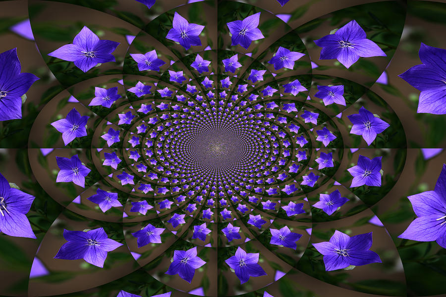 Balloon Flower Kaleidoscope Photograph  - Balloon Flower Kaleidoscope Fine Art Print