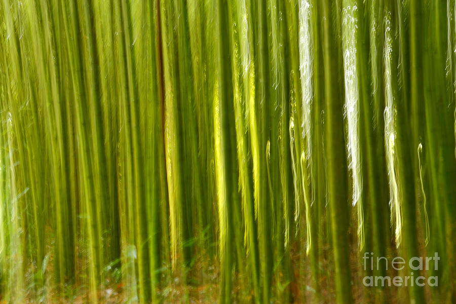 Bamboo Abstract Photograph  - Bamboo Abstract Fine Art Print