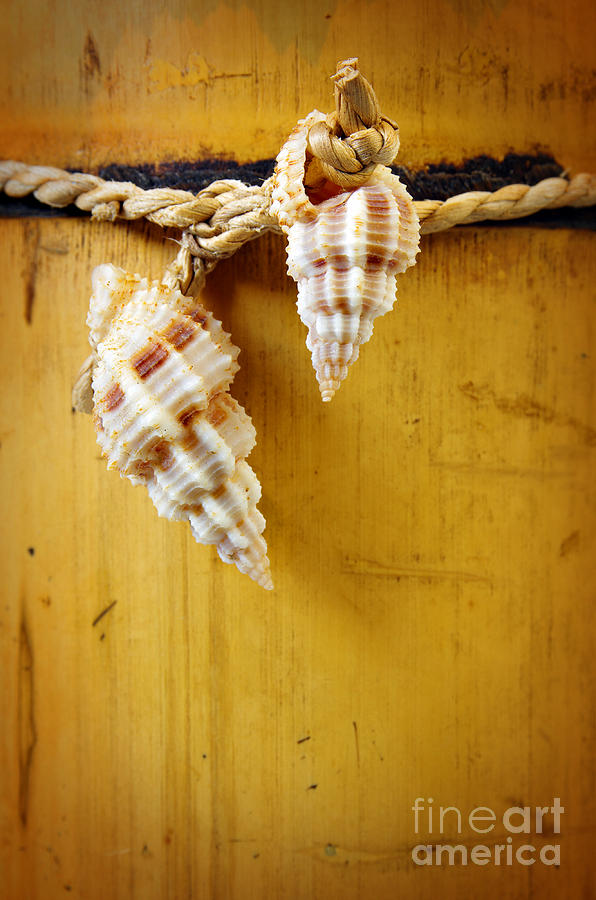 Bamboo And Conches Photograph  - Bamboo And Conches Fine Art Print
