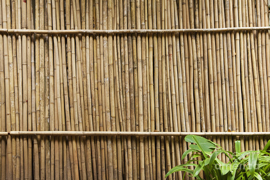 Architectural Detail Photograph - Bamboo Fence by Don Mason