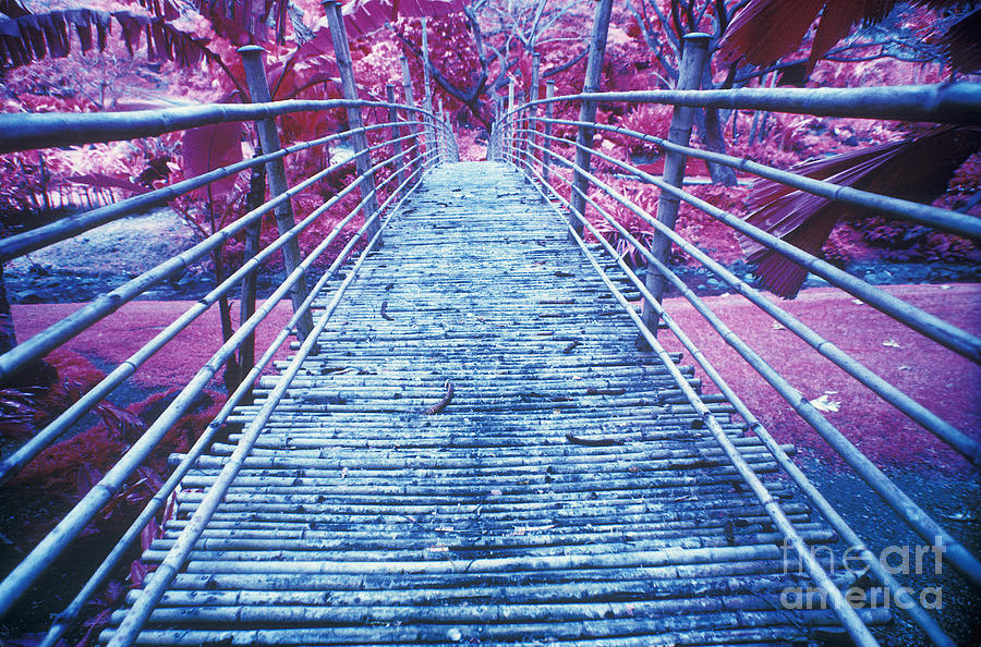 Architectural Detail Photograph - Bamboo Foot Bridge by Will and Deni McIntyre