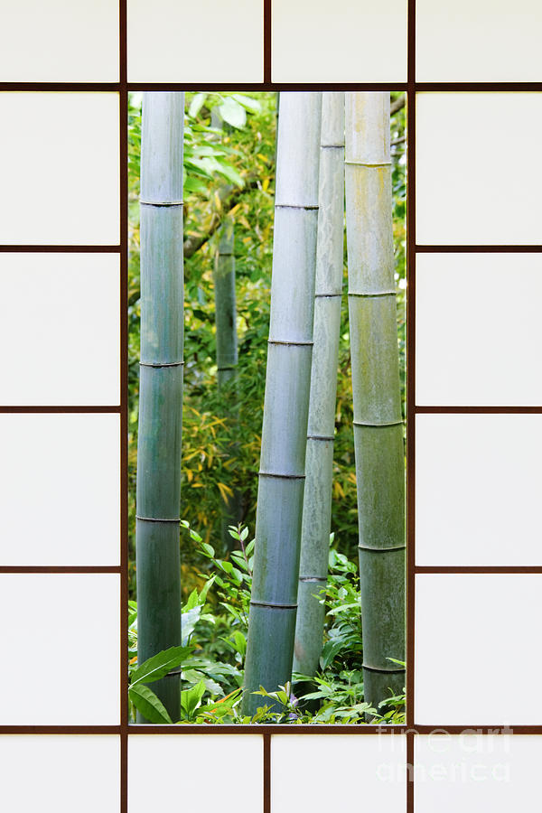 Bamboo Forest Through A Rice Paper Window Photograph  - Bamboo Forest Through A Rice Paper Window Fine Art Print