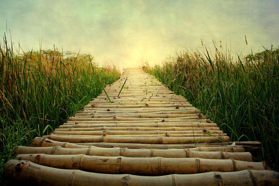 Bamboo Path In Grass At Sunrise Photograph