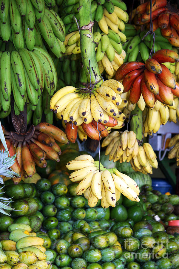 Banana Display. Photograph  - Banana Display. Fine Art Print