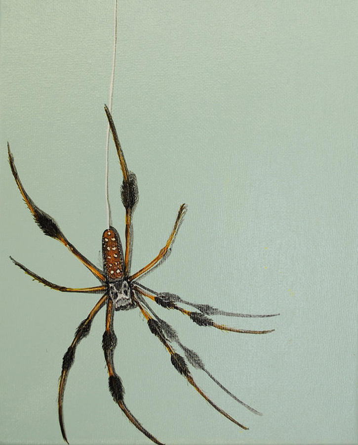 Banana Spider Painting  - Banana Spider Fine Art Print