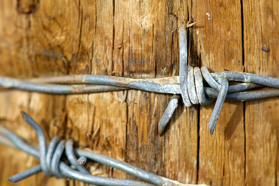 Barbed Photograph  - Barbed Fine Art Print
