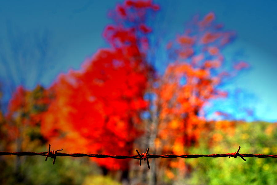Barbwire Fall Photograph